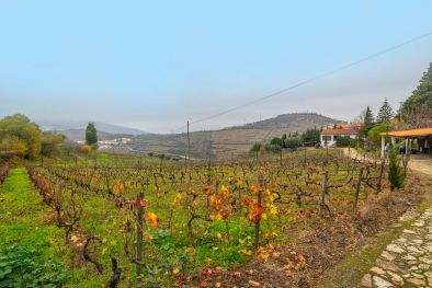 SMALL VINEYARDS, WINERY AND HOME FOR SALE IN PORTUGAL, LAMEGO  Maggiori Dettagli e Foto