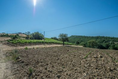 WINE ESTATE WITH APARTMENT FOR SALE IN GROSSETO, TUSCANY MONTECUCCO
