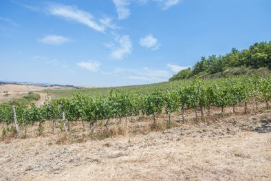 MONTALCINO: CELLAR TO BE RESTORED WITH 10 HA OF VINEYARD FOR SALE  Maggiori Dettagli e Foto