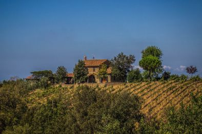 MORELLINO DI SCANSANO DOCG: COUNTRY HOUSE WITH CELLAR FOR SALE, MAREMMA, MAREMMA TOSCANA DOC, FARMHOUSE, VILLA, SCANSANO, GROSSETO, TUSCANY, VINEYARD, CELLAR, WINE ESTATE