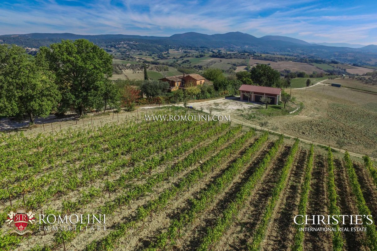 VINEYARD FOR SALE IN ITALY