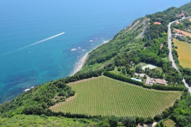 VILLA SEA VIEW WITH VINEYARD FOR SALE IN LE MARCHE