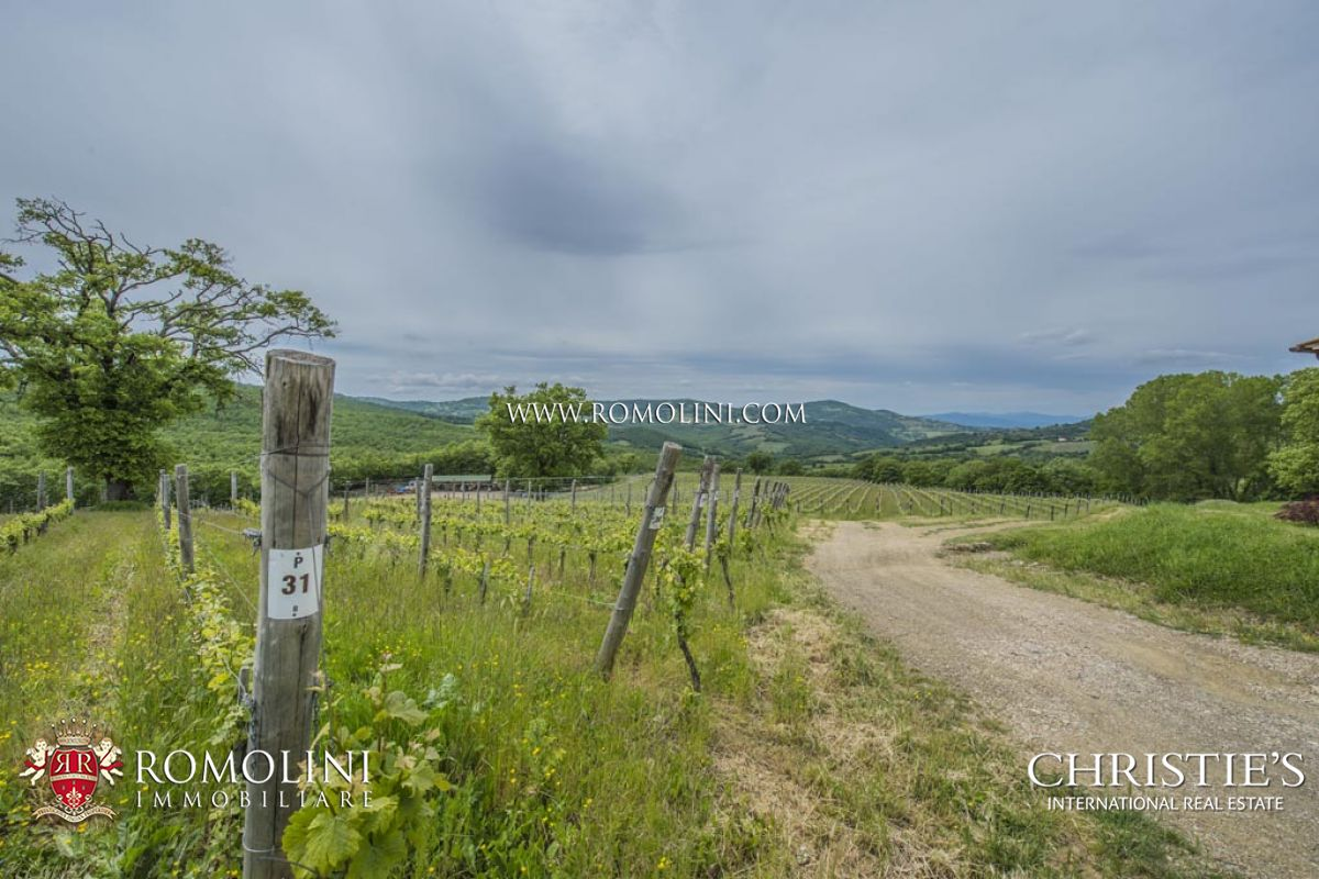 MORELLINO DI SCANSANO WINE ESTATE FOR SALE IN MAREMMA, TUSCANY