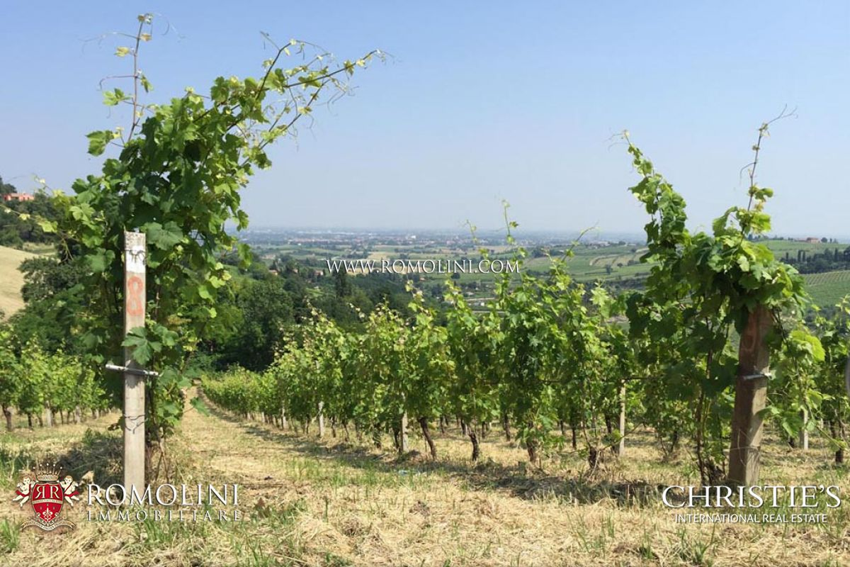 WINE ESTATE SANGIOVESE DI ROMAGNA FOR SALE CESENA