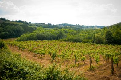 WINE ESTATE CHIANTI COLLI FIORENTINI FOR SALE RUIN TO RESTORE
