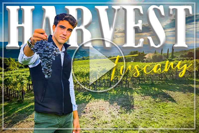 LET'S TAKE PART IN THE HARVEST WITH DANILO IN THIS BEAUTIFUL ORGANIC WINERY