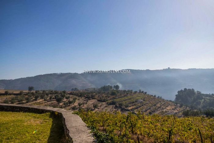 WINE ESTATE QUINTA FOR SALE IN PORTUGAL, WINERY & VINEYARDS, PORTUGUESE WINE CELLAR, VILA REAL