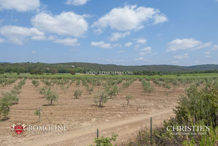 WINE ESTATE FOR SALE IN THE TUSCAN MAREMMA, GROSSETTO