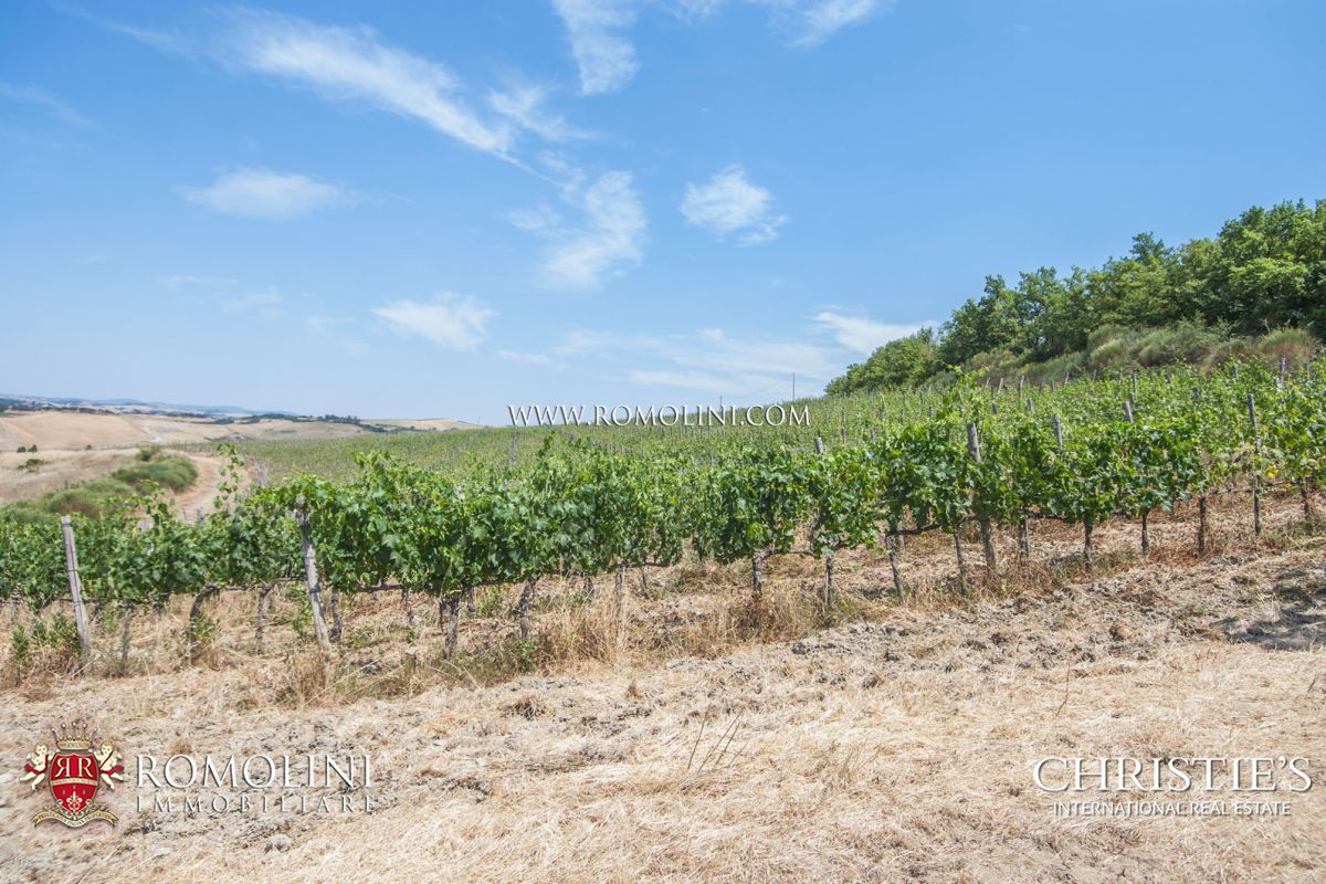 MONTALCINO: CELLAR TO BE RESTORED WITH 8 HA OF VINEYARD FOR SALE, ROSSO DI MONTALCINO, SANT'ANTIMO