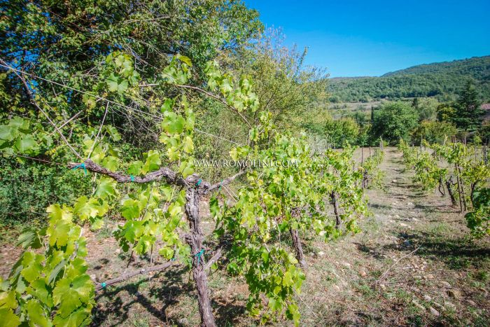 ORVIETO, UMBRIA: CELLAR WITH 4.5 HA VINEYARDS FOR SALE