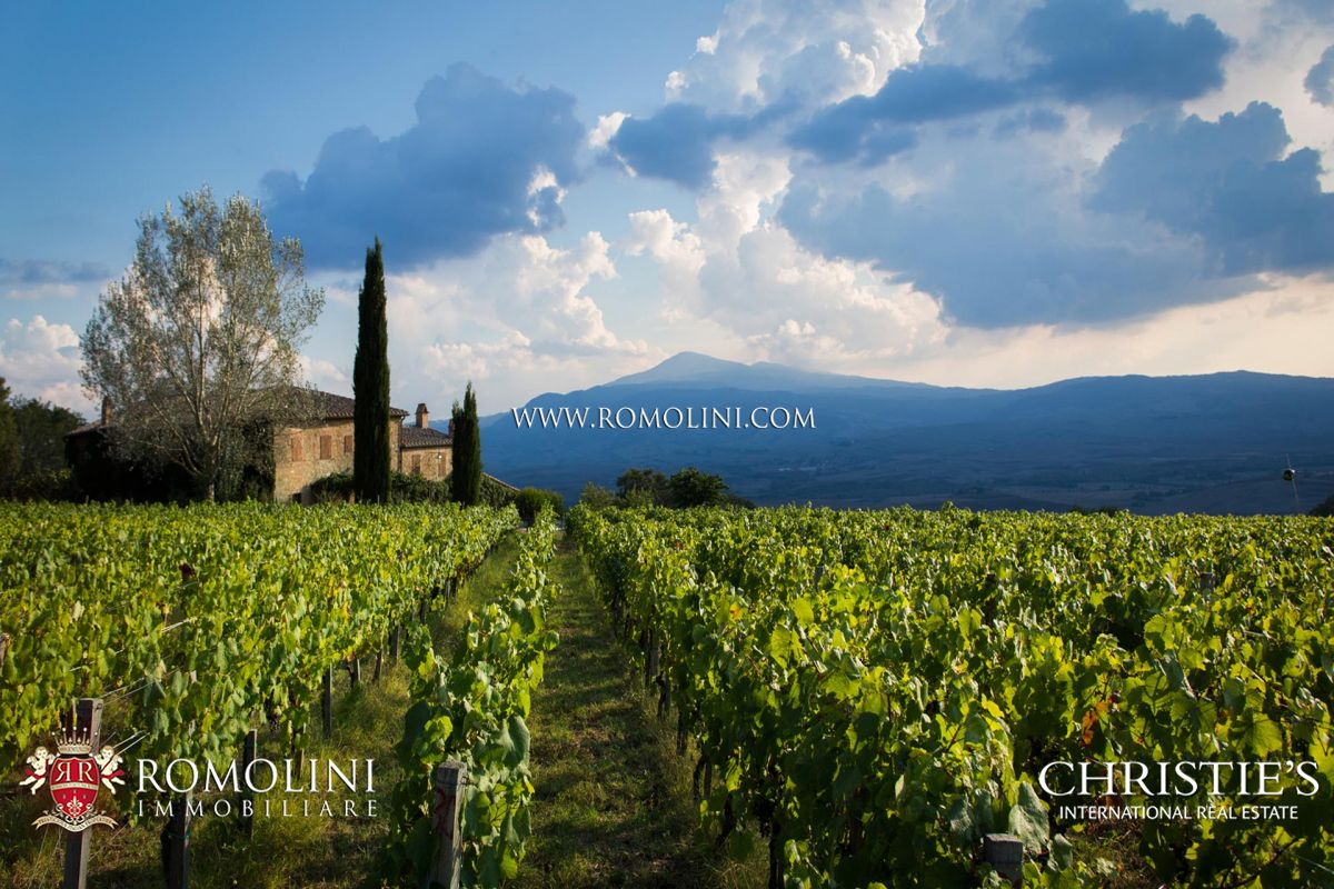 WINE ESTATE (4.4 HA VINEYARD) FOR SALE IN MONTALCINO, VAL D'ORCIA | Romolini - Christie's