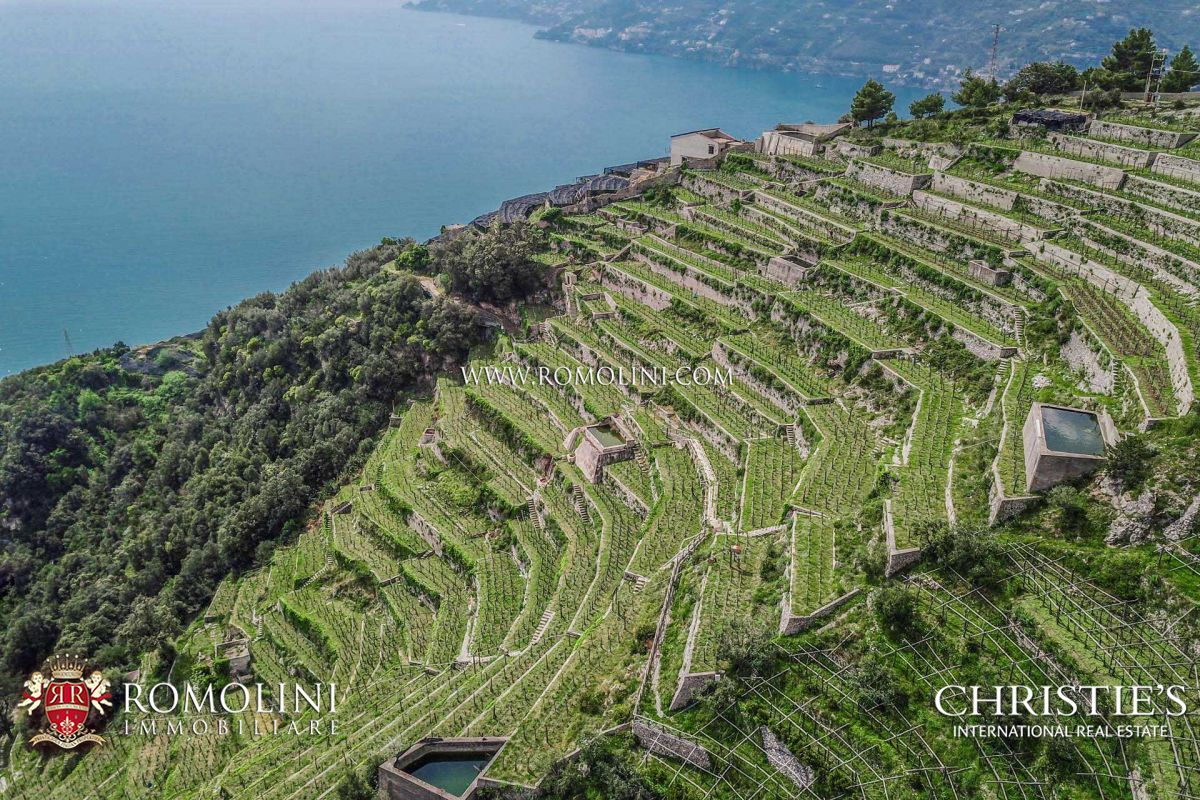 54.4-Acre ORGANIC VINEYARDS AND WINERY FOR SALE AMALFI COAST, ITALY