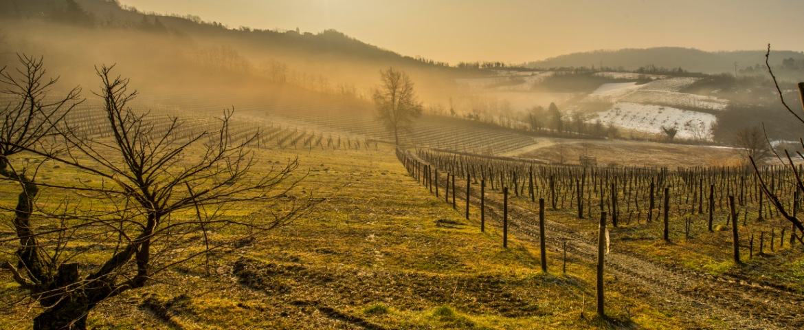 The hills of Monferrato, covered in Barbera vineyards