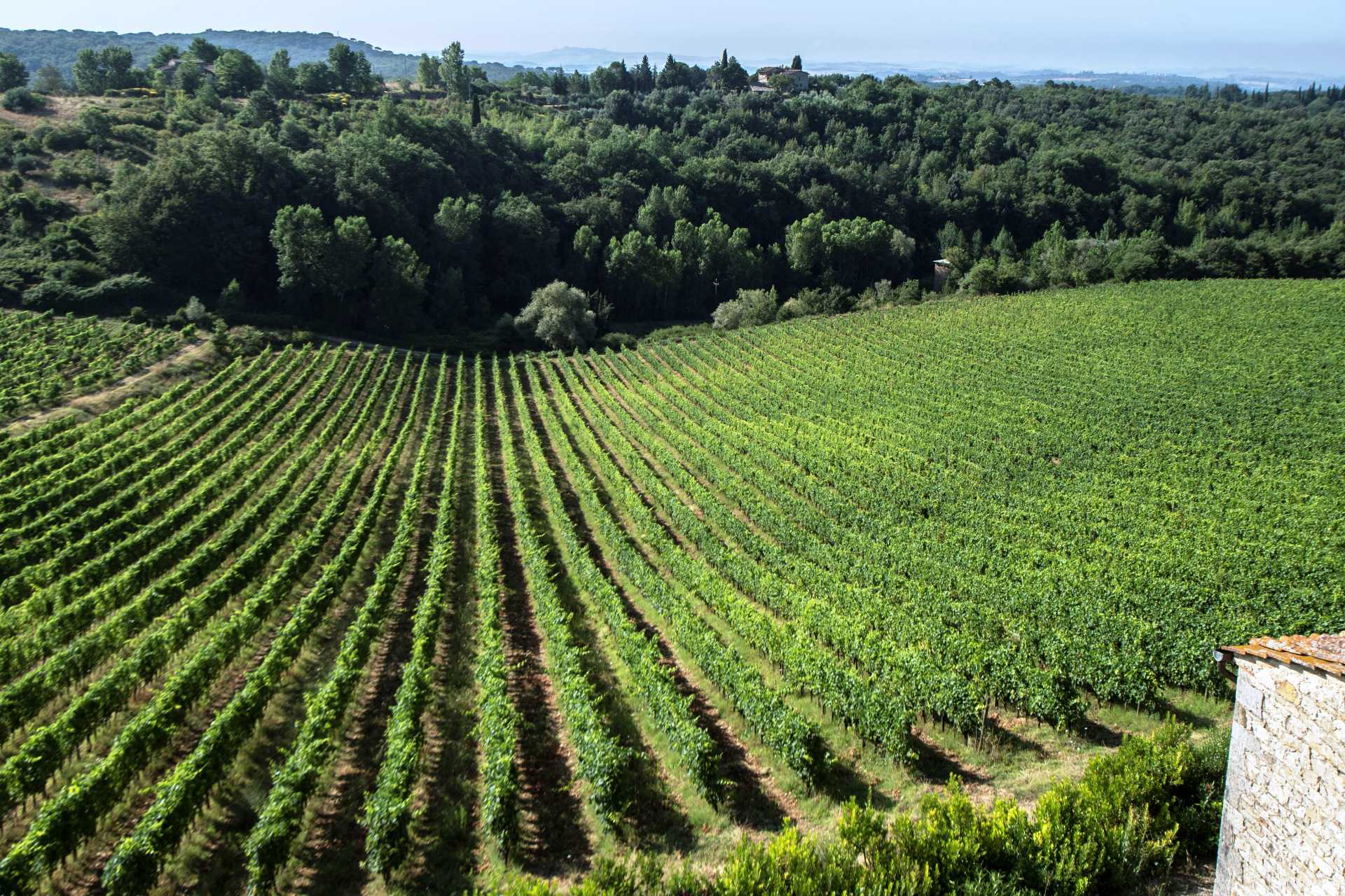 Vineyards & Wineries Chianti Classico